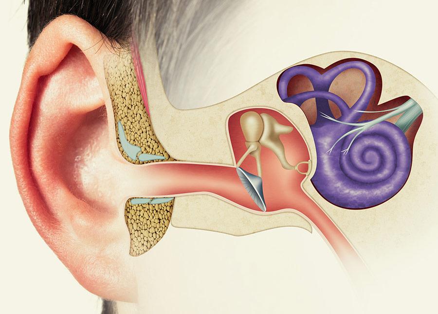 Vestibular Therapy inner ear illustration